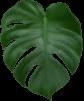 Rebus Plant Leaf